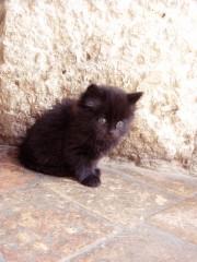 chat noir,jade,sury,girault